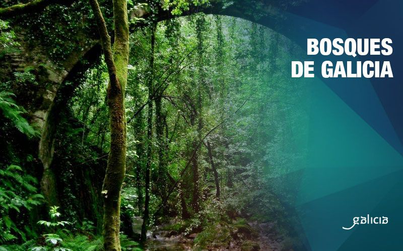 Bosques de Galicia